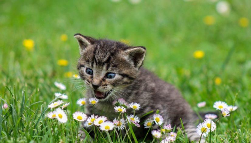 kitty-2948404_1280