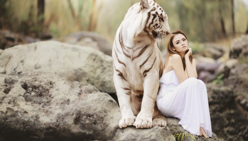 Tigers attraction and soulmates