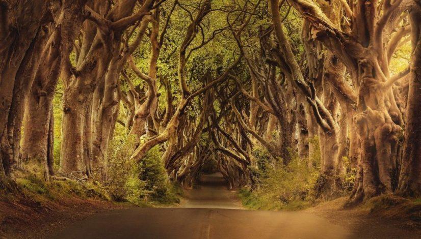 trees-3464777_1280